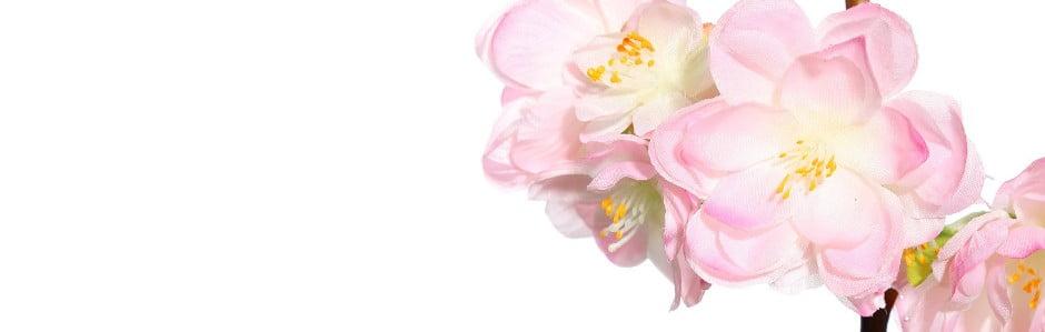 Obklopte se květinamisIxia