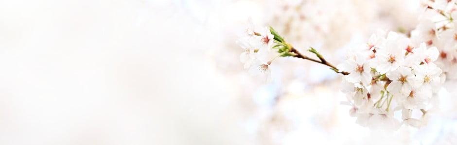 Užívejte si jaro v obležení barev
