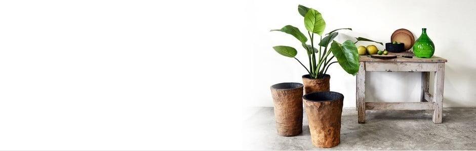 Vascolari, jedinečné palmové dřevo