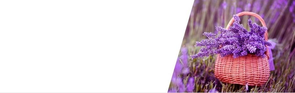 V duchu levandulové Provence