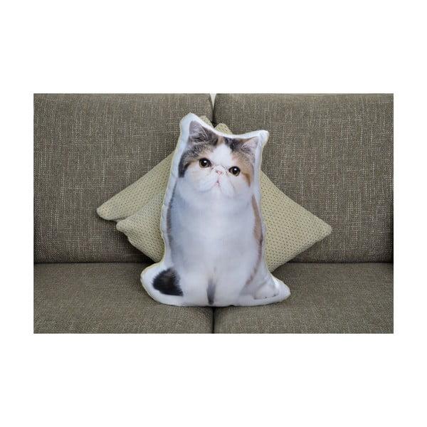 Polštářek Adorable Cushions Exotická krátkosrstá kočka