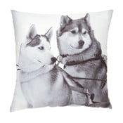 Polštář Sled Dogs, 45x45 cm
