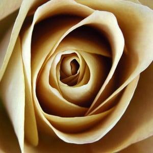 Obraz na skle Růže I, 20x20 cm