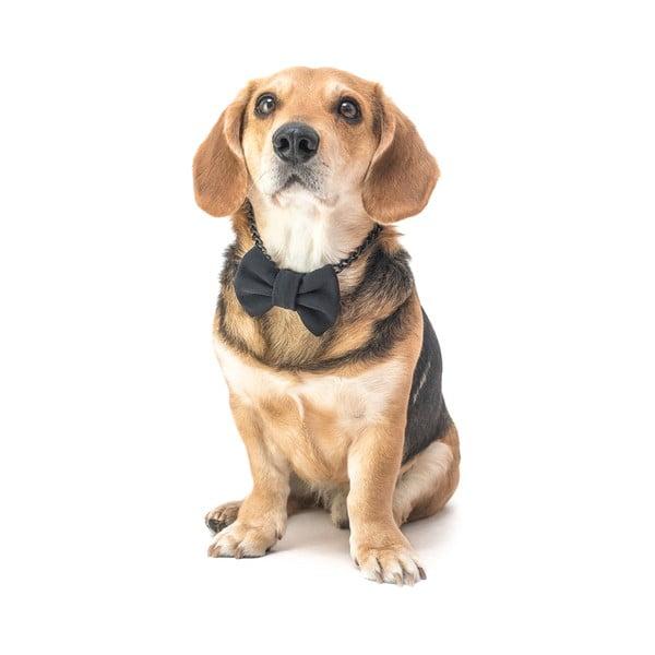 Černý charitativní psí motýlek Funky Dog Bow Ties, vel. L
