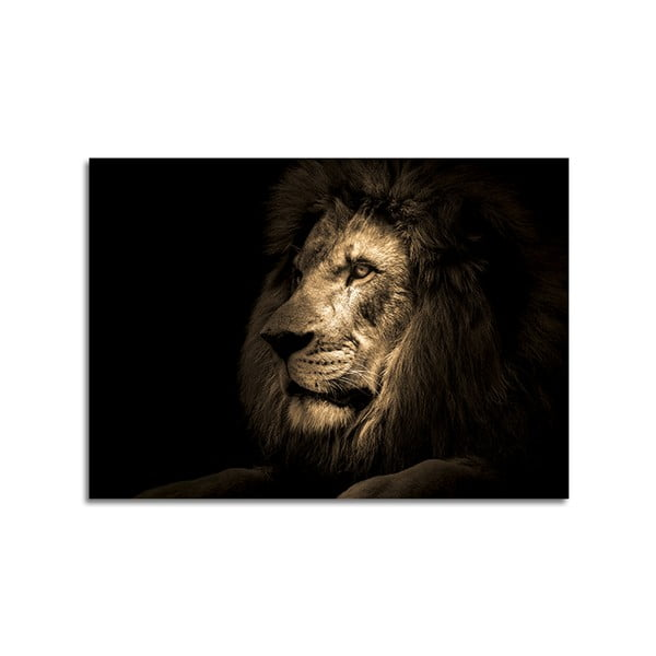 Obraz Styler Glas Animals Lion, 70 x 100 cm