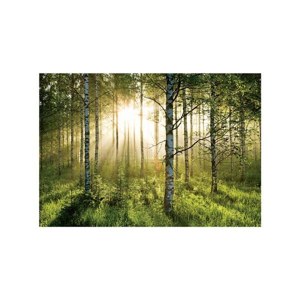 Velkoformátová tapeta V lese, 366x254cm