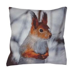 Polštář Animals Squirrel, 42x42 cm