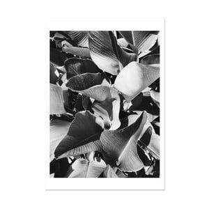 Plakát HF Living Botanic Aphrodite, 21 x 30 cm