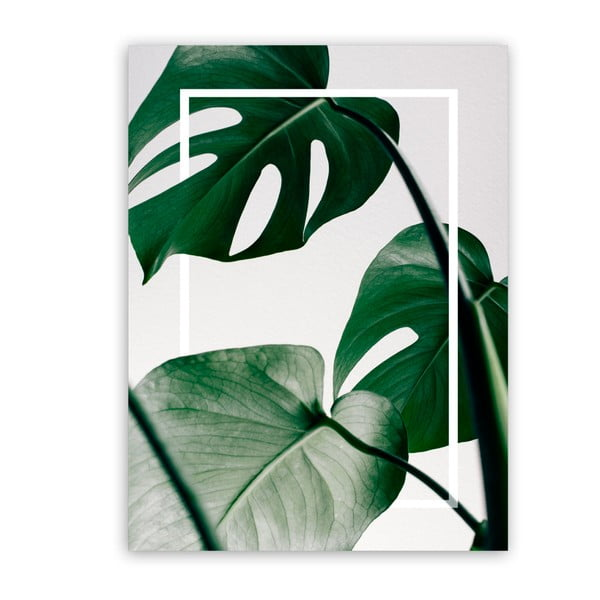 Obraz Styler Canvas Greenery Monstera, 60 x 80 cm