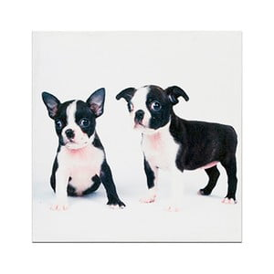 Dřevěná cedule Little Puppies, 30x30 cm