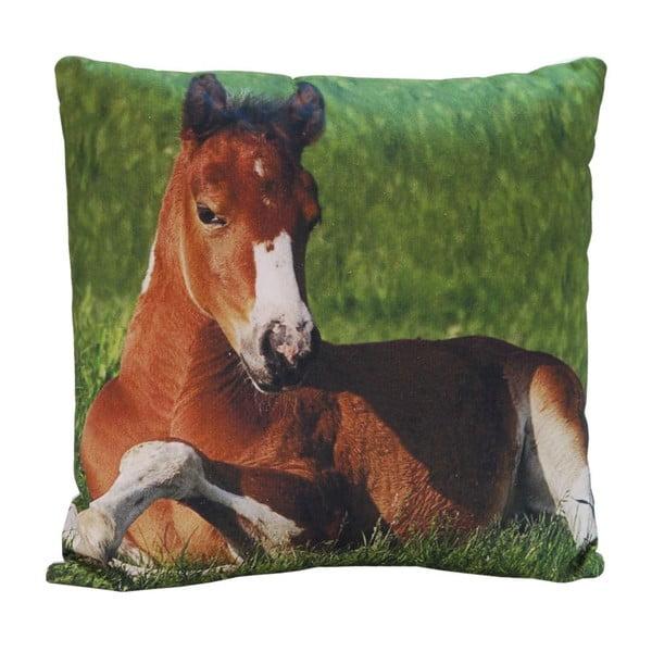 Polštář Horse Appolo, 45x45 cm