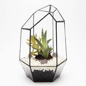 Terárium s rostlinami Gem Urban Botanist, tmavý rám