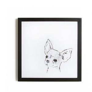 Tablou înrămat  Graham & Brown Chihuahua, 40 x 40 cm