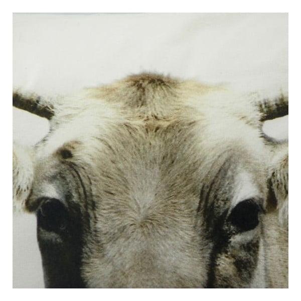 Polštář Swiss Cow 50x50 cm
