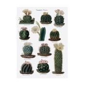 Prosop de bucătărie Magpie Botanical Cactus