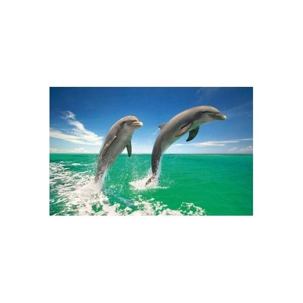 Fotoobraz Dolphin Duo, 51x81 cm