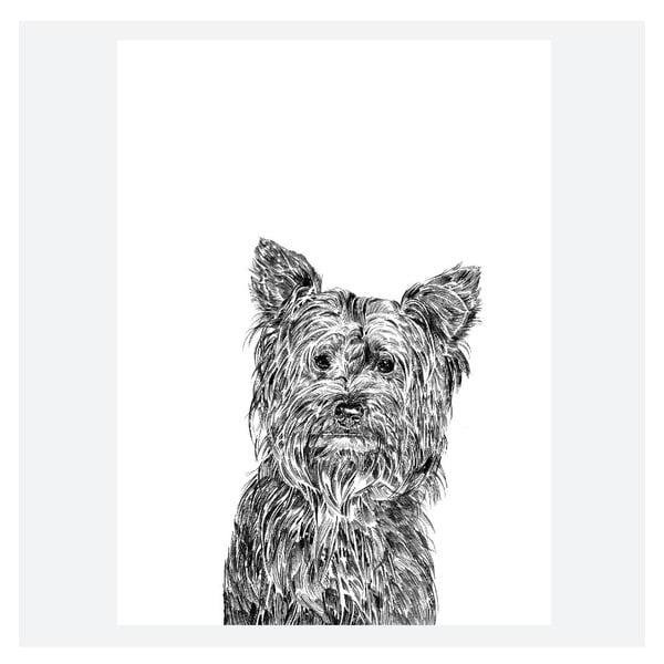 Plakát Freddie the Yorkshire Terrier, 30x40 cm