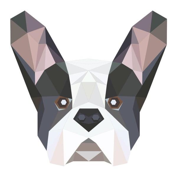 Origami Bulldog falmatrica - Ambiance