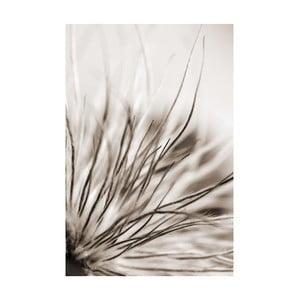 Fotoobraz Černobílá, 40x60 cm, exkluzivní edice