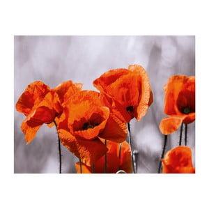 Skleněný obraz Red Spot Poppies 60x80 cm
