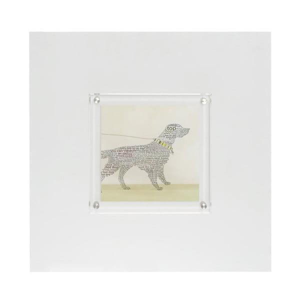 Obraz Labrador, 50x50 cm