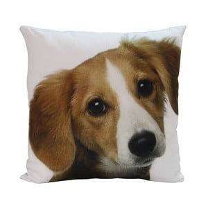 Polštář Happy Dog, 45x45 cm