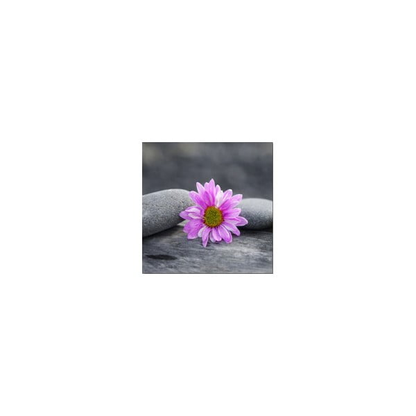 Obraz na skle Kvítí, 20x20 cm