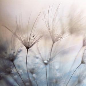 Skleněný obraz Teardrops 50x50 cm