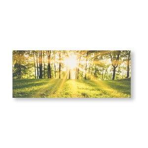 Obraz Graham & Brown Tranquil Forest Fields, 40 x 100 cm