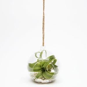 Závěsné terárium s rostlinami Urban Botanist Epiphyte