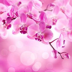Obraz na skle Orchidej II, 20x20 cm