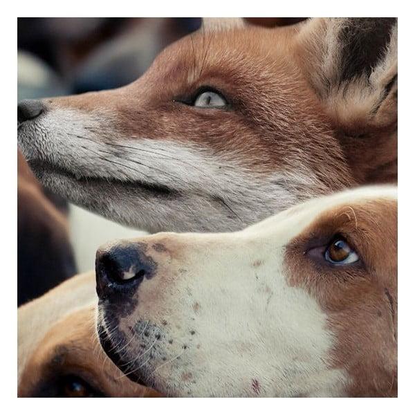 Předložka Foxhounds 75x50 cm