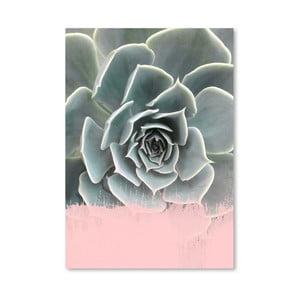 Plakát Americanflat Pink On Succulent, 30x42cm
