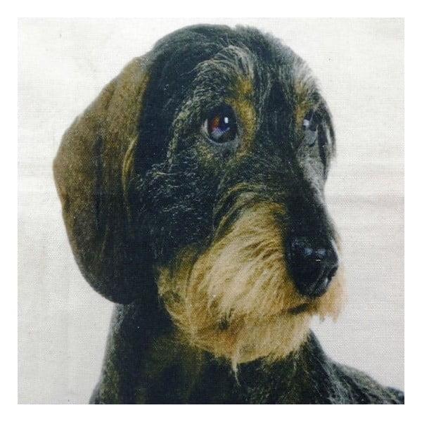 Polštář Mars&More Dog, 50x50 cm