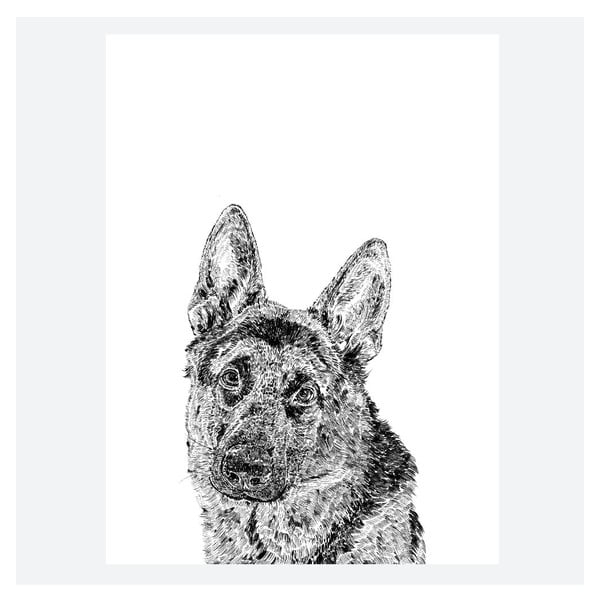 Plakát Roger the German Shepherd, 30x40 cm