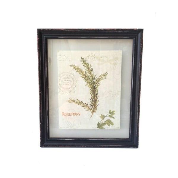 Obraz Hierbas Rosemary, 38x32,5 cm