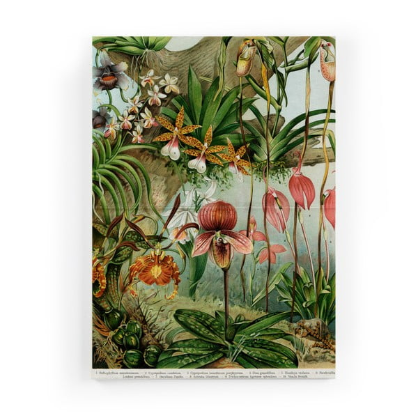 Tablou Surdic Jungle Flowers, 50 x 70 cm