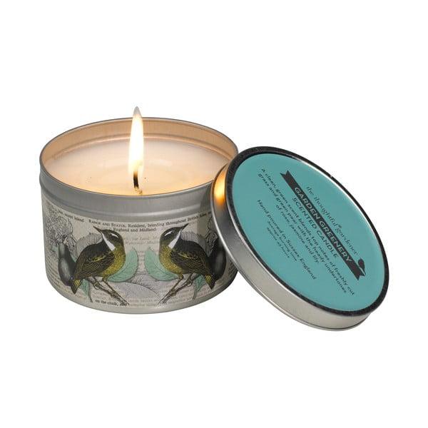 Vonná svíčka s vůní čerstvé zeleně