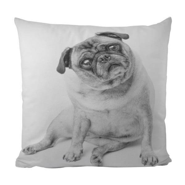 Polštář Piggy Dog, 50x50 cm