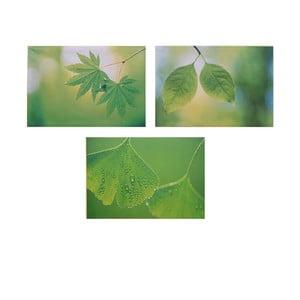 Set 3 dřevěných obrazů Leaves, 50x36 cm