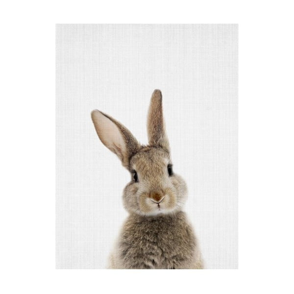 Baby Animals Rabbit poszter, 30 x 40 cm - Blue-Shaker