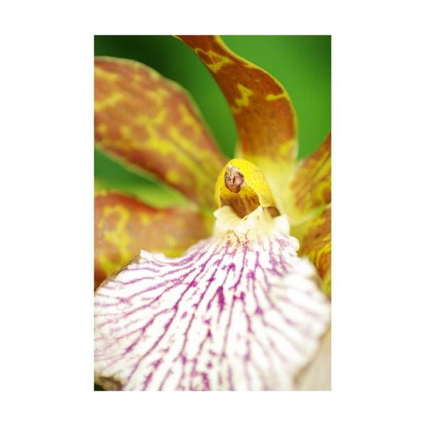Fotoobraz Žlutý květ, 40x60 cm, exkluzivní edice