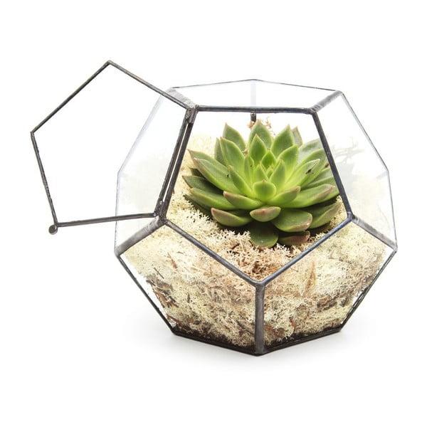 Terárium s rostlinami Urban Botanist Penta, tmavý rám