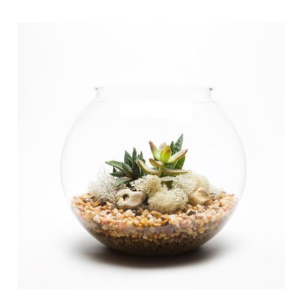 Kulaté terárium s rostlinami Urban Botanist Natural