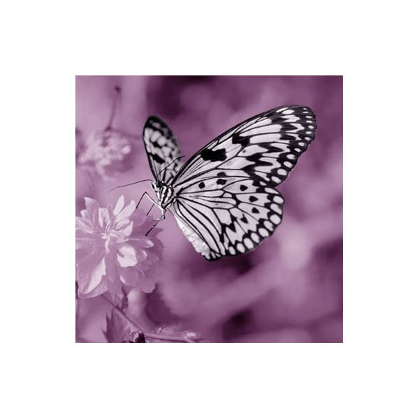 Obraz na skle Motýl III, 30x30 cm