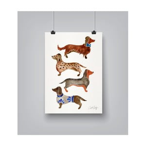 Poster Americanflat Dachshunds, 30 x 42 cm
