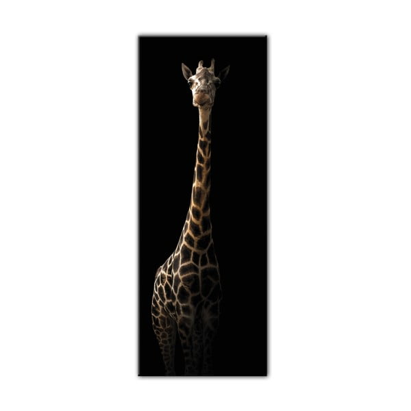 Obraz Styler Glas Animals Gira, 50 x 125 cm