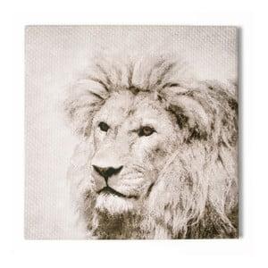 Tablou Graham & Brown Roar, 50 x 50 cm
