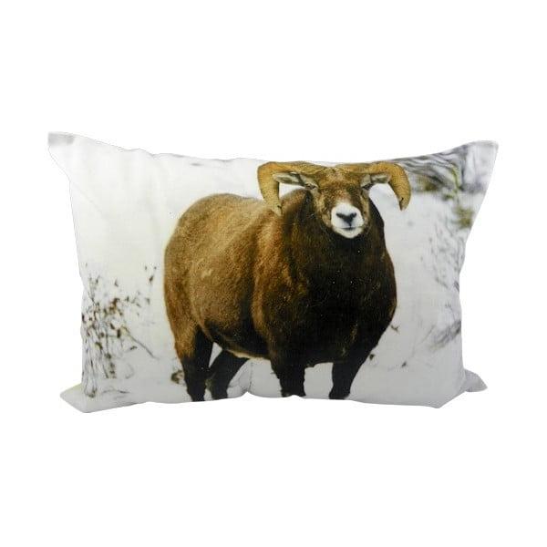 Polštář Sheep Brown 50x35 cm