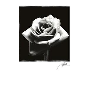 Fotoobraz Rose, 81x51 cm